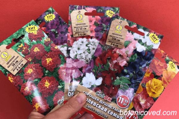 Сорта цветов, которые можно посадить на балконе